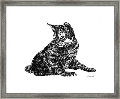 Cat Drawings 6 Framed Print by Gordon Punt