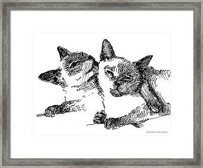 Cat-drawings-siamese-2 Framed Print by Gordon Punt