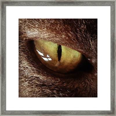 Cat Eye Framed Print