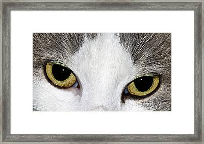 Framed Print featuring the photograph Cat Eyes by David Lester