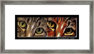 Cat Eyes Framed Print by EricaMaxine  Price