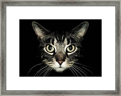 Cat Face Framed Print by by Jonathan Fife