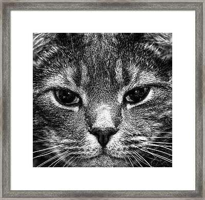 Cat Face In Black And White Framed Print