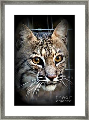 Framed Print featuring the photograph Cat Fever by Kathy  White