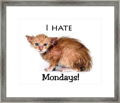 Cat Hates Monday Framed Print