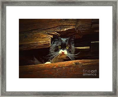 Cat Hiding Framed Print