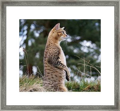 Cat Impersonating Meerkat Framed Print