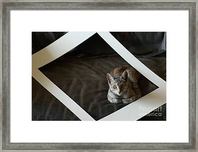 Cat In A Frame Framed Print by Micah May