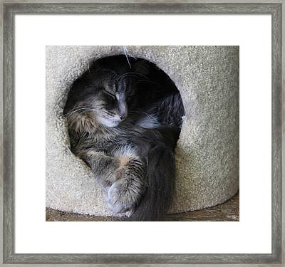 Cat In A Hole Framed Print by Mary-Lee Sanders