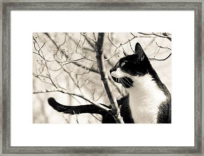 Cat In A Tree In Black And White Framed Print