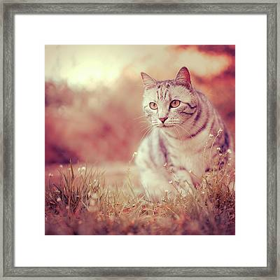 Cat In Grass Framed Print