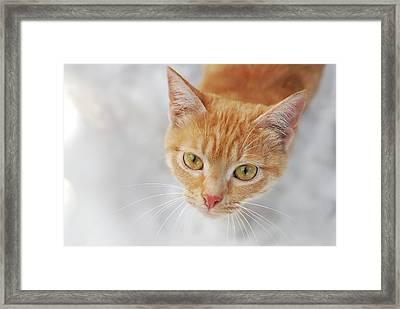 Cat In Orange Color Framed Print by Lilia Petkova