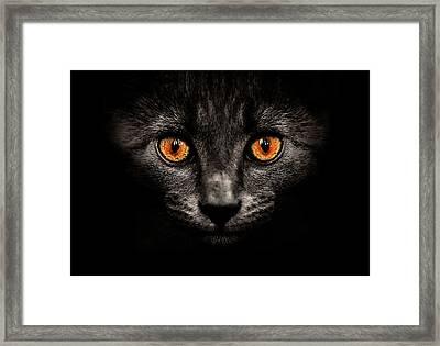 Cat In Shadows. Framed Print by Ingólfur Bjargmundsson