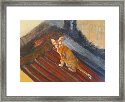 Cat In Thailand Framed Print