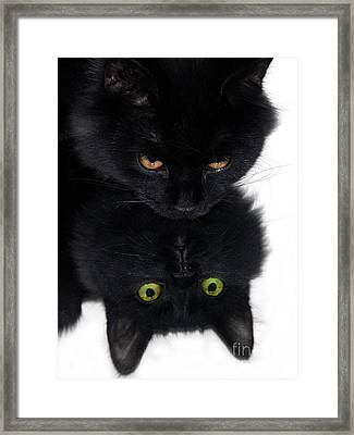 Cat In The Mirror Framed Print