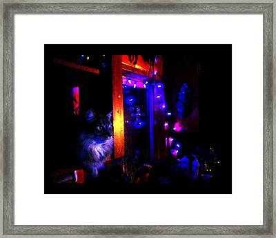 Framed Print featuring the photograph Cat In The Night Kitchen by Susanne Still
