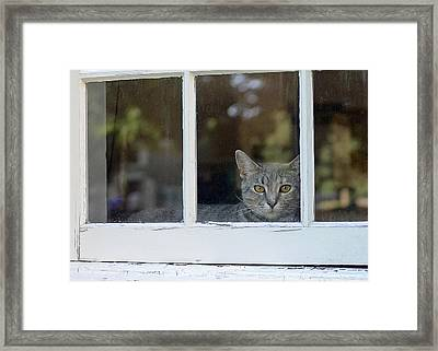 Cat In The Window Framed Print by Lisa Phillips