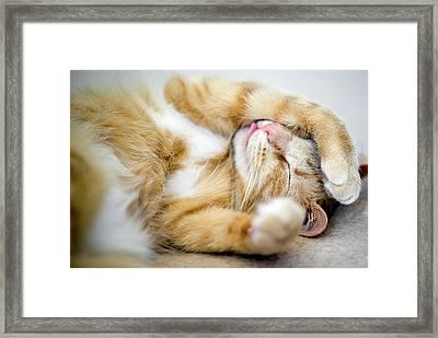 Cat Is Sleeping Framed Print by Sebastian Brzezinski