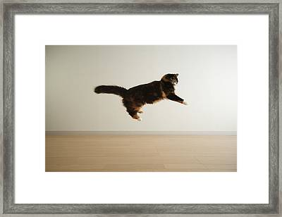 Cat Jumping In Air Framed Print by Junku