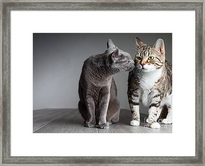 Cat Kiss Framed Print by Nailia Schwarz
