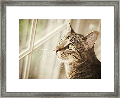 Cat Looking At Window Framed Print by Jody Trappe Photography