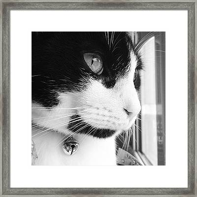 Cat Looking Out Window Framed Print