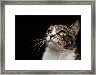 Cat  Looking  Upward Framed Print by Monica Fecke