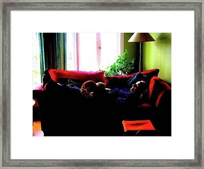 Cat Nap Framed Print by Marwan George Khoury