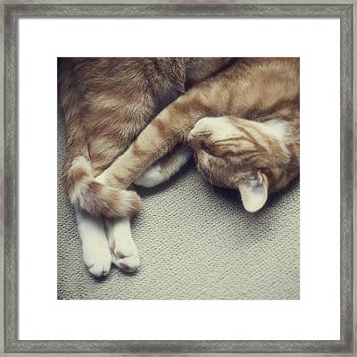 Cat Nap Framed Print by Paula Daniëlse