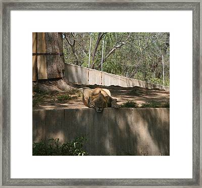 Framed Print featuring the photograph Cat Nap by Stacy C Bottoms