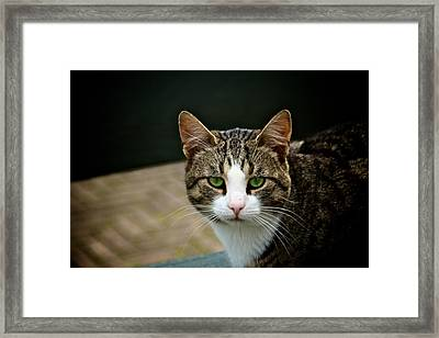 Cat Framed Print by Odd Jeppesen