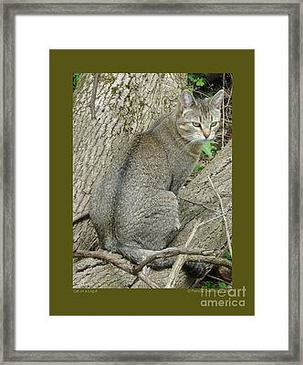Framed Print featuring the photograph Cat On A Log-ii by Patricia Overmoyer
