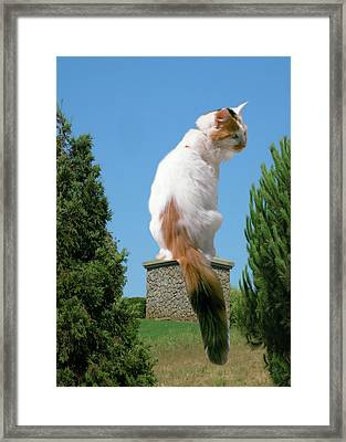 Framed Print featuring the photograph Cat On Pedestal by Bonnie Muir