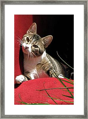 Cat On Red Framed Print by Inga Smith