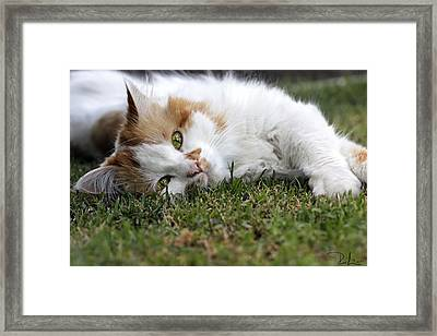 Framed Print featuring the photograph Cat On The Grass by Raffaella Lunelli