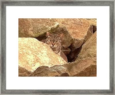 Cat On The Rocks Framed Print