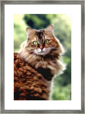 Framed Print featuring the photograph Cat Portrait by Raffaella Lunelli
