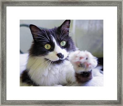 Cat Reaches For Camera Framed Print by Lori Coleman