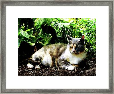 Cat Relaxing In Garden Framed Print by Susan Savad