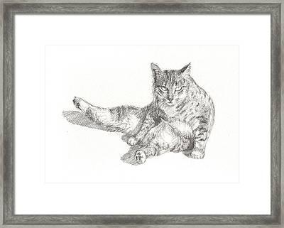 Cat Sitting Framed Print