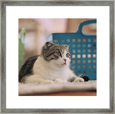 Cat Sitting On Floor Framed Print by Jiyeon-Agnes, Lee loves Analog images by Films!