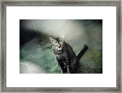 Cat Sitting On Floor Framed Print by Raj's Photography