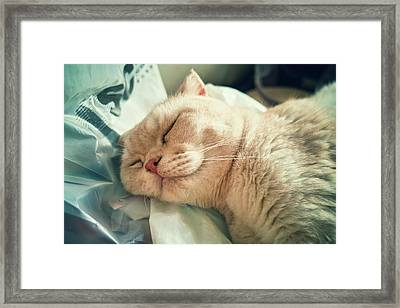 Cat Sleeping Comfortably Framed Print
