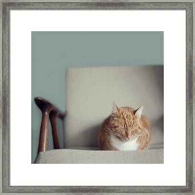 Cat Sleeping On Comfy Creme Chair Framed Print