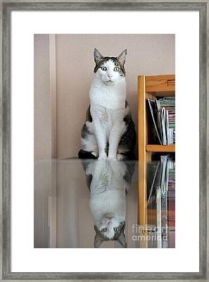 Cat Standing On Chair Framed Print