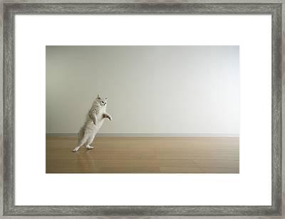 Cat Standing On Hind Legs Framed Print