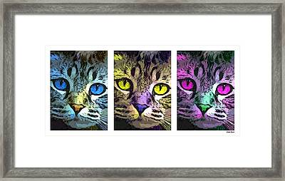 Cat Framed Print by Stephen Younts