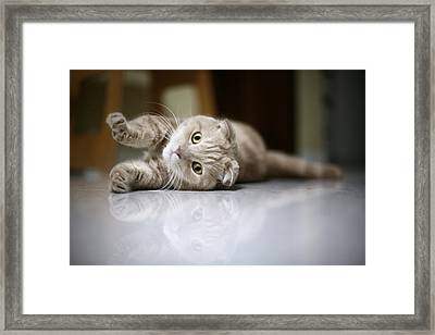 Cat Stretching Framed Print
