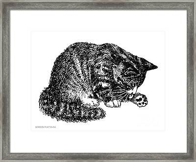 Cat-tabby-posters-1 Framed Print by Gordon Punt