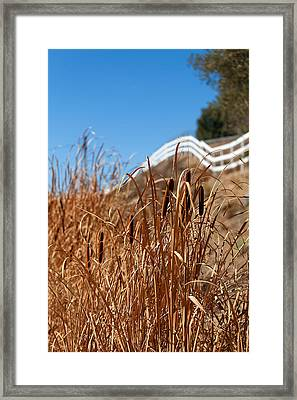 Cat Tails And Galloping Fence Framed Print by Peter Tellone